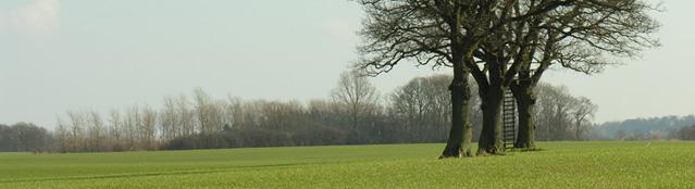 Baum mit Leiter